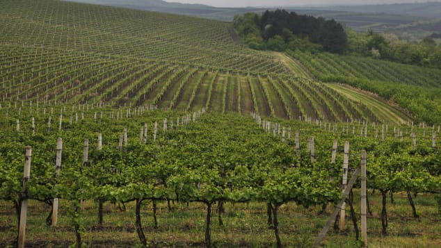 Moldova may be the poorest country in Eastern Europe, but it has an impressive viniculture.