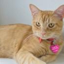 Orange kitty cat laying on white wall