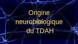 TDAH : comprendre l'origine neurobiologique