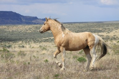 May-Steens-trip-day-4-640