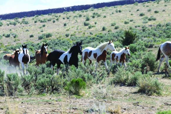 Steens-May-trip-day-5-Rob-309