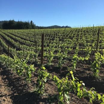 atthejoy, wine country retreat