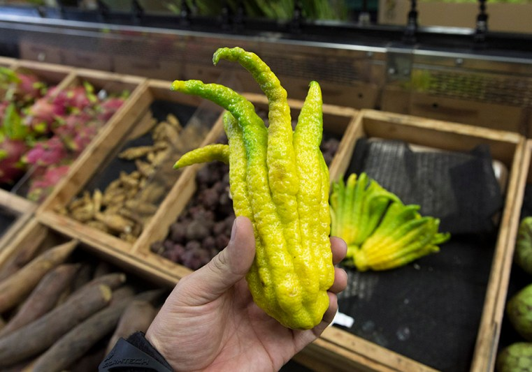 Buddha's hand, or the fingered citron