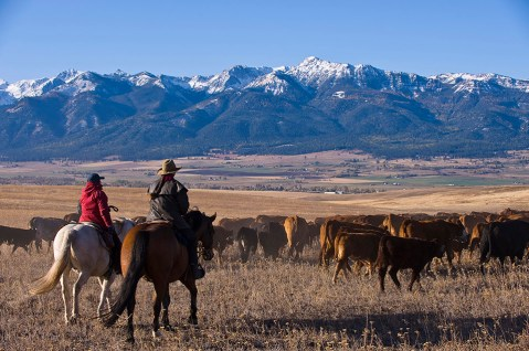 A pair of riders move the herd to winter pasture on a cattle drive in northeastern Oregon.