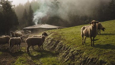 1859-Jan-Feb-Pachamama-Farm-Bradley-Lanphear-74