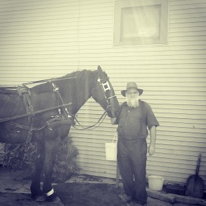 Amisz ze swoim koniem, Ohio