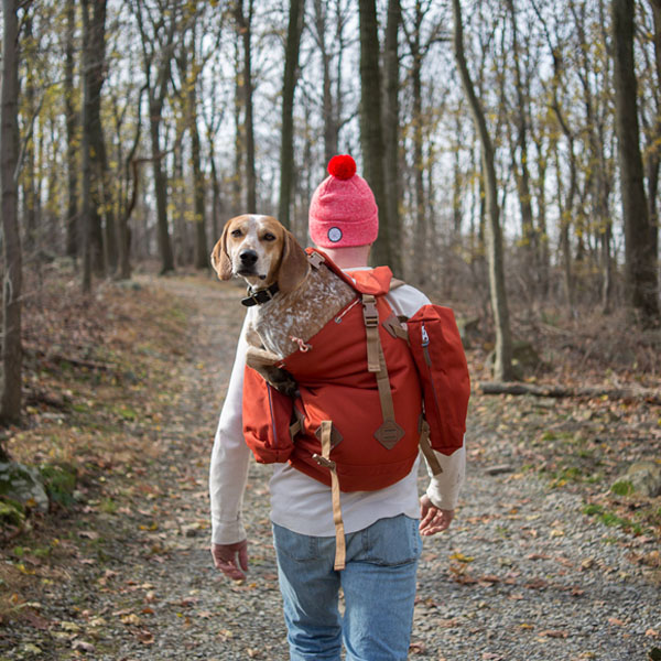 maddie-the-coonhound-02