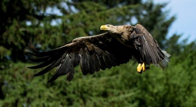 2.plads_Eagle_Tonni-Paibjerg