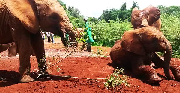 elephantopphanage