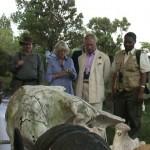 Kina stopper import af elfenben