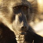 Event: Hvad tænker dyr?