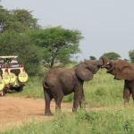 Online event: Kan turisme bidrage til naturbevarelse og lokal udvikling i Afrika?