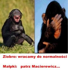 Kaczyński - małpy 5