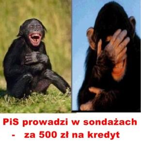 Kopia (6) Kaczyński - małpy