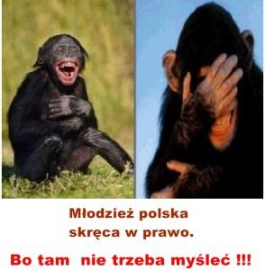 Kopia (14) Kaczyński - małpy