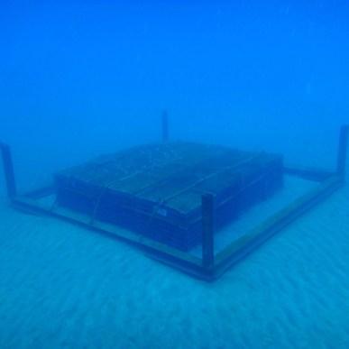 海底熟成ワイン - 3