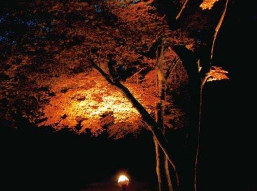 六甲高山植物園の紅葉ナイトツアー