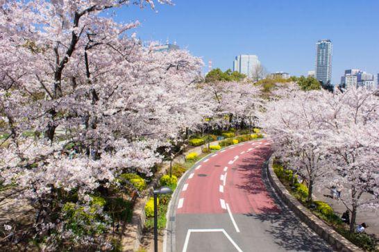 サイクリング花見
