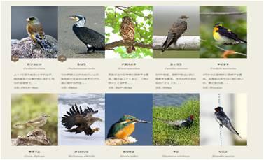 さまざまな野鳥をご紹介