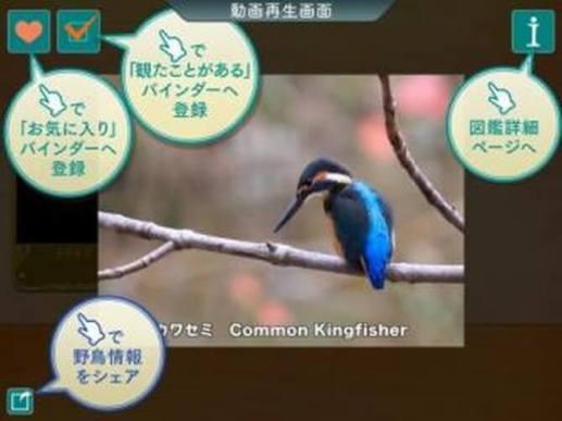 スマホアプリ「GPS動く野鳥図鑑400」
