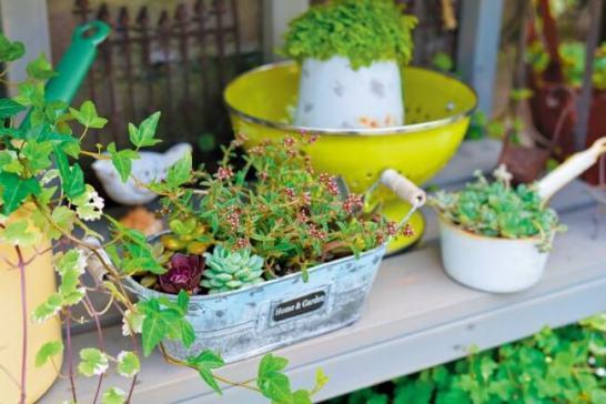 寄せ植えの方法やプランツカタログなど、植物の基本情報も詳しく紹介しています