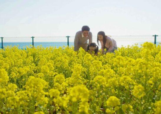鴨川シーワールド 「花祭り2018」2月3日(土)より開催