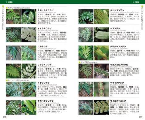 高尾山 全植物—草・木・シダ1500種