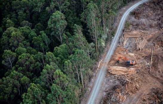 ターカインでの産業規模の森林伐採は、60種類以上の希少種や絶滅危惧種を深刻に脅かす  Photo_Krystle Wright