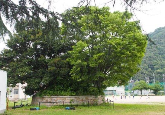 小学校の校庭に残された「土公さん」と呼ばれる禁足地