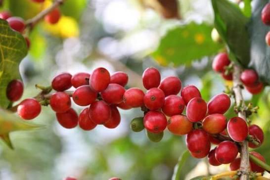 バレルエイジドコーヒー