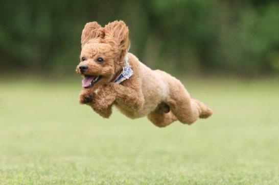 飛行犬 2