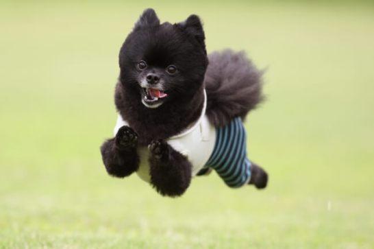 飛行犬 6