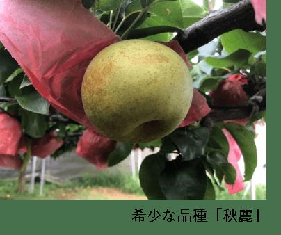 秋麗(しゅうれい)