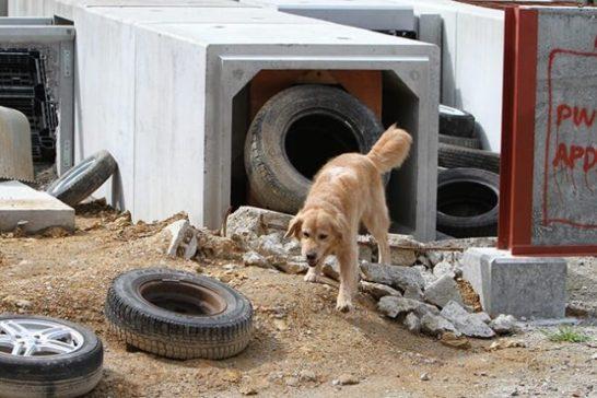 犬用ブーツ「ドックドッグ いぬくつ」