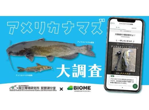 【国立環境研究所×Biome】スマホアプリを用いた外来魚「アメリカナマズ」の全国調査を実施