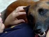 Pies najlepszym przyjacielem człowieka i wiernym kompanem przed telewizorem