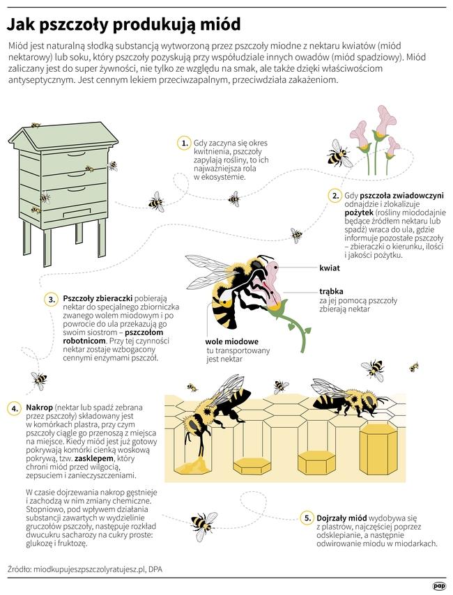 Zakaz stosowania pestycydów nie pomaga podmiejskim pszczołom