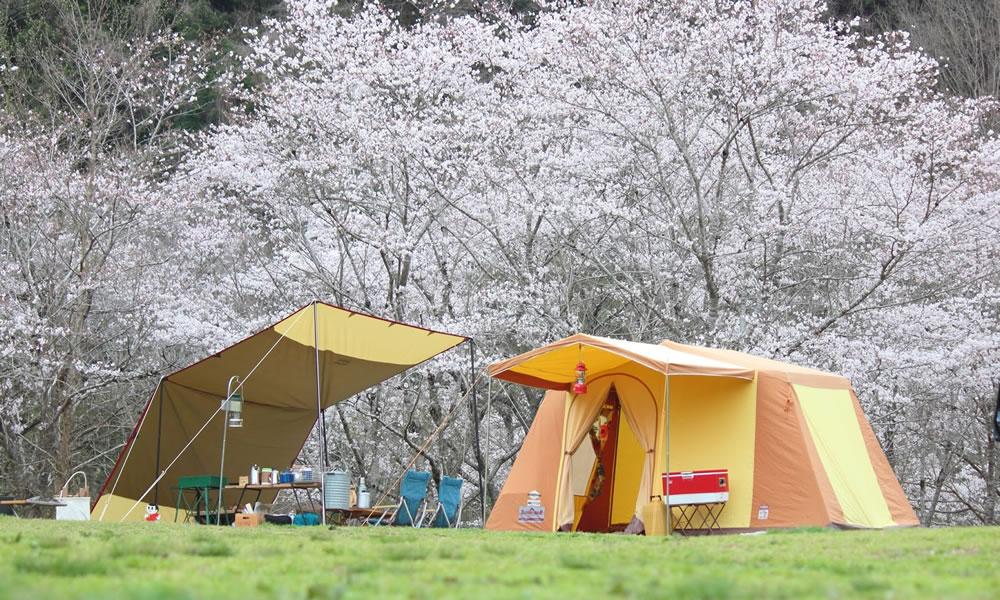 """今年のキーワードは""""グランピング""""。お花見キャンプデビューしてみない?"""