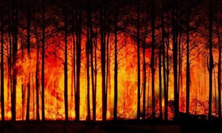 incêndio; fogo
