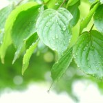 ベタベタ汗の原因、ベトベト汗を変える意外な改善法や対策