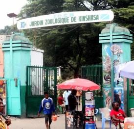 Zoo tennis : le plus ancien club de Kinshasa 1