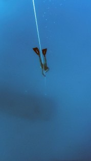 freediving-1383105_1920