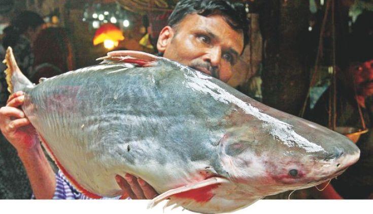 National Fisheries Week begins tomorrow