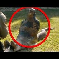 18+ Гигантска анаконда изяжда жив човек (видео)