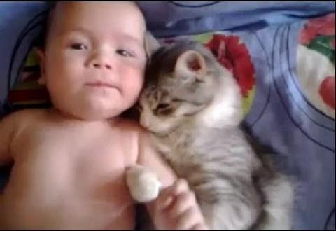 Бебе и коте