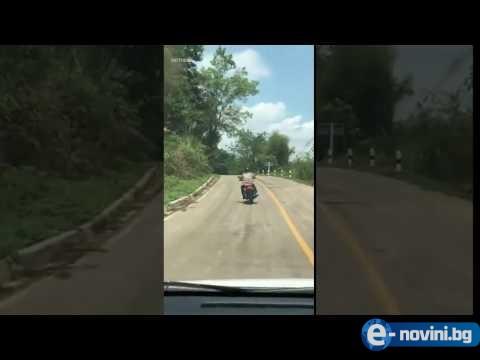 Огромна отровна змия напада мотор в движение! (ВИДЕО)