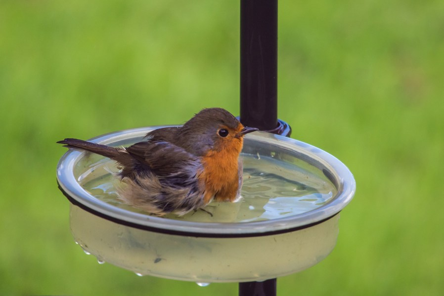a bird in a bird bath