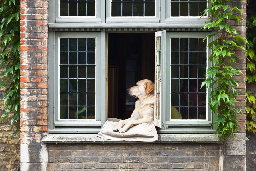 a dog leaning on the window sill of a century home