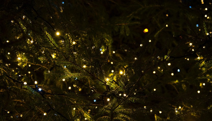Tiny lights in a tree