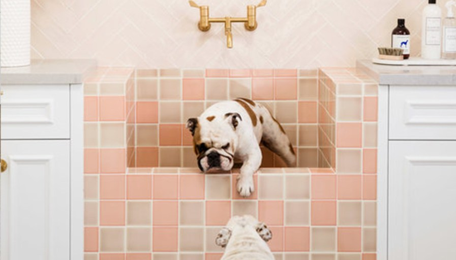 Two bulldogs getting into a pink-tiled bath